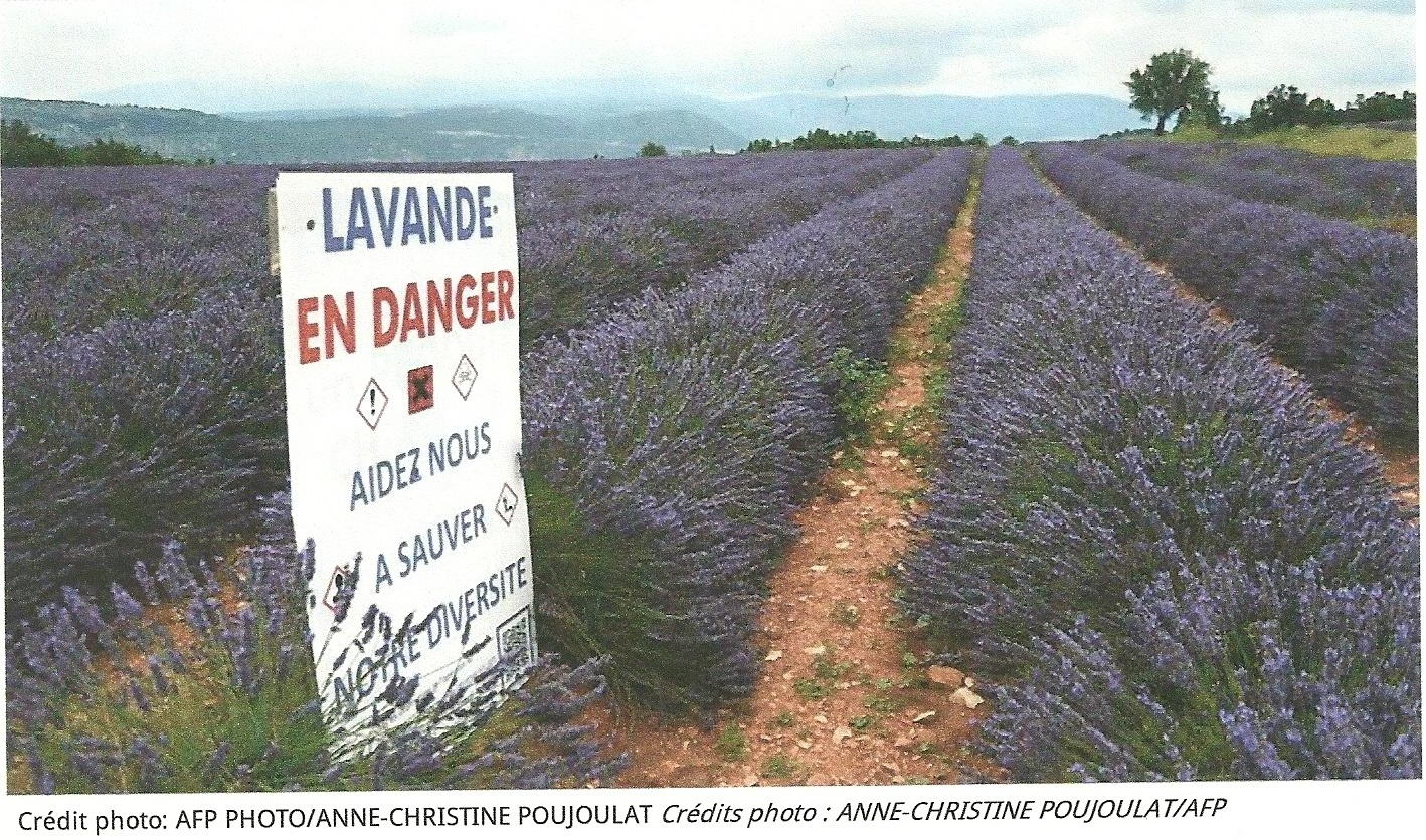 Lavender: black clouds over fields of blue